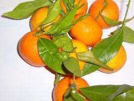 Mandarinenöl (*), ab 10 ml